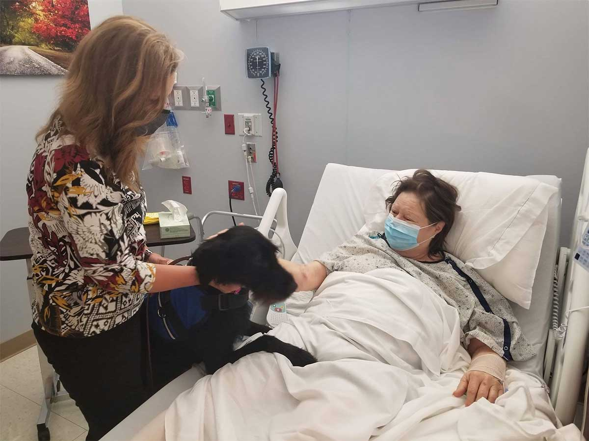 Scout the Therapy Dog